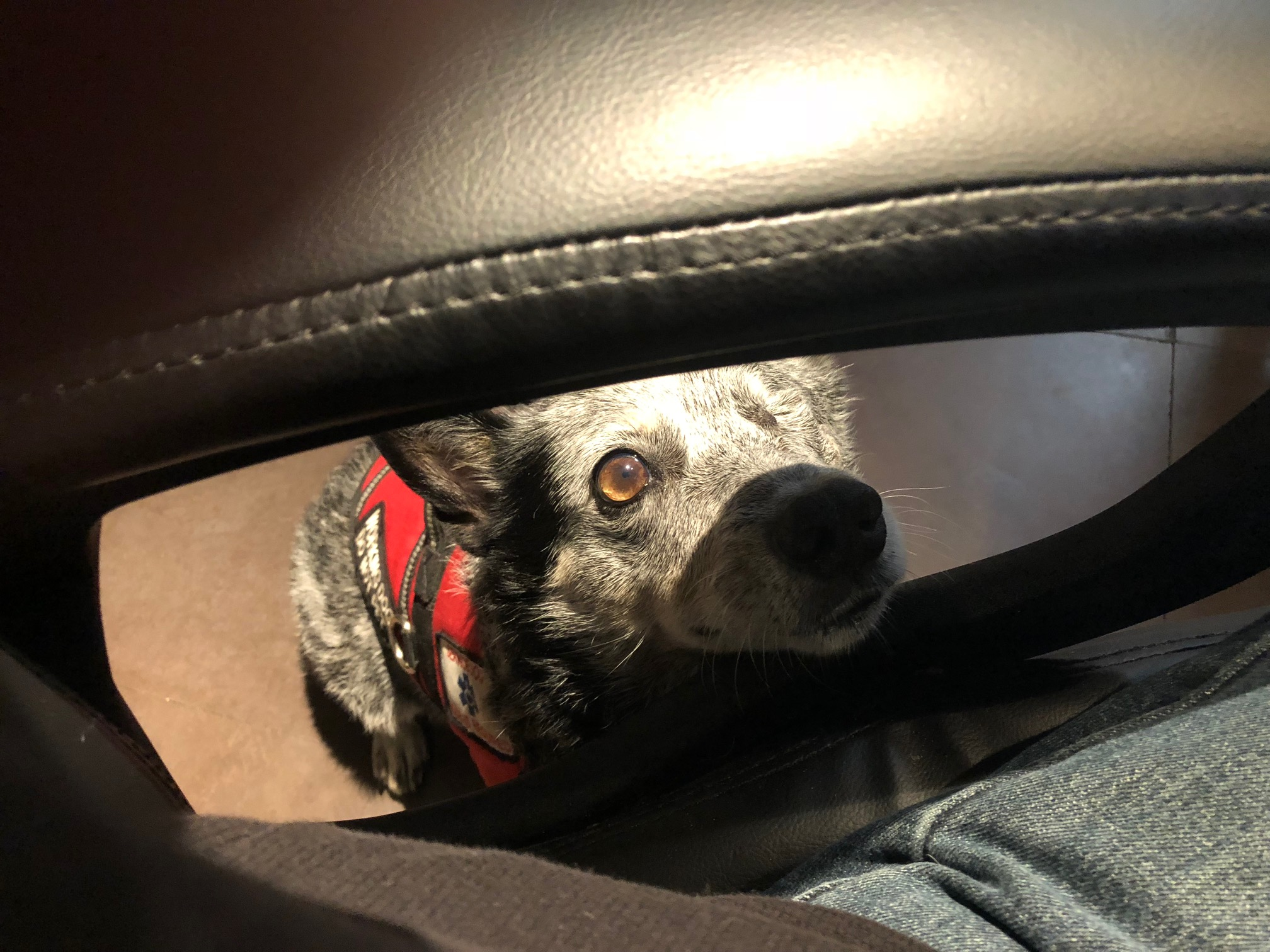 A Day In The Life Of A Working Service Dog – The M Network